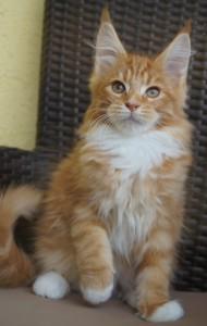 Xtreme Garfield